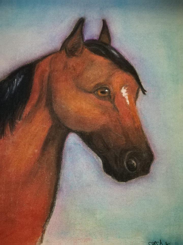 Bay horse drawing