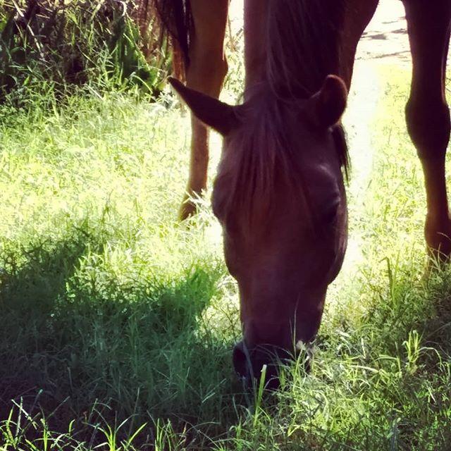 Al grazing