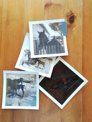 Bonus and Velvet Polaroids